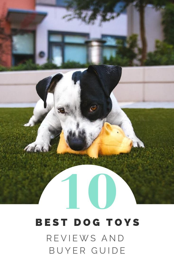 10 Best Dog Toys Reviews And Buyer Guide 2019 With Images Best Dog Toys Dog Toys Dogs