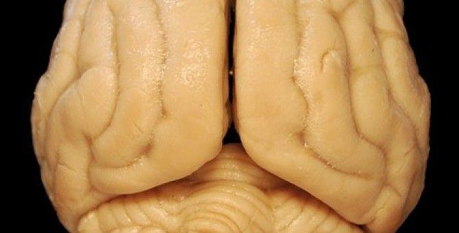 Half Brain is Better Than Full Brain. Part 5 of 5