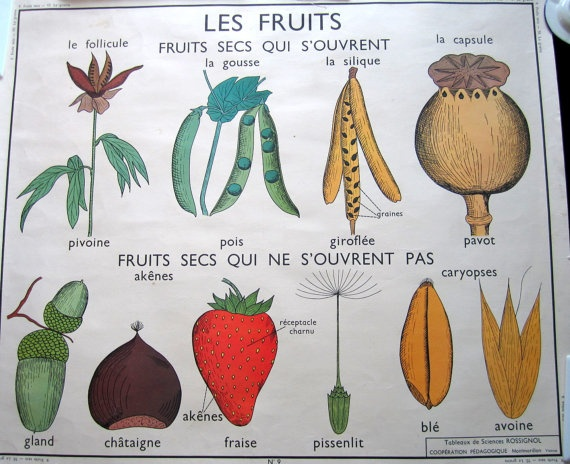 french school poster 1960's