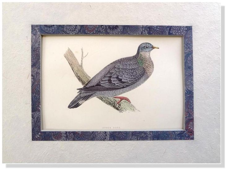 F.O. Morris- Stock Dove -1892  British Birds Woodblock Engraving Matted #Vintage123yearsold