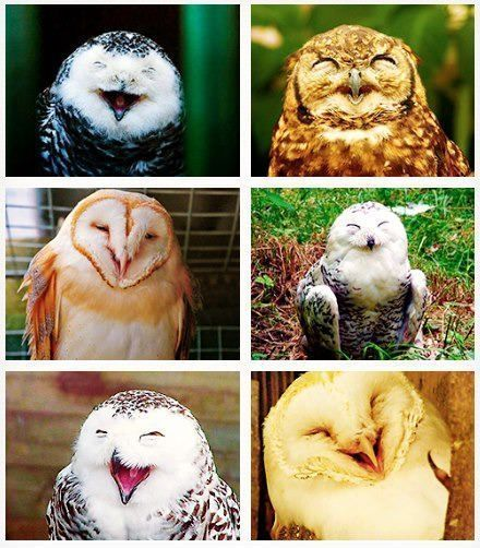 Smiling/Laughing Owls. Adorable!