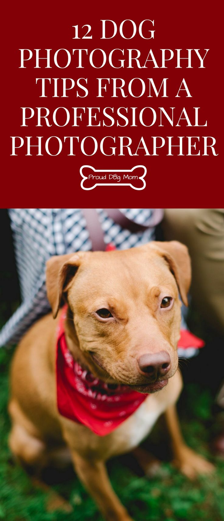 Ask The Experts 12 Dog Photography Tips From A