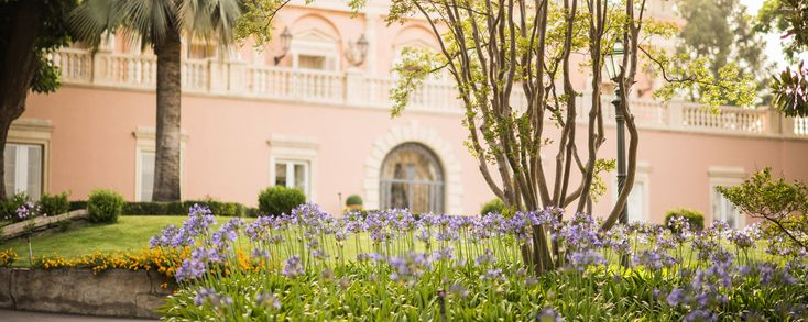 The queens of the garden, Agapanthus flowers blooming in june #villalalimonaia