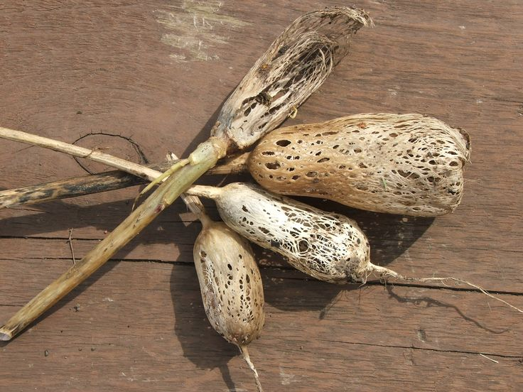 Dried Radishes