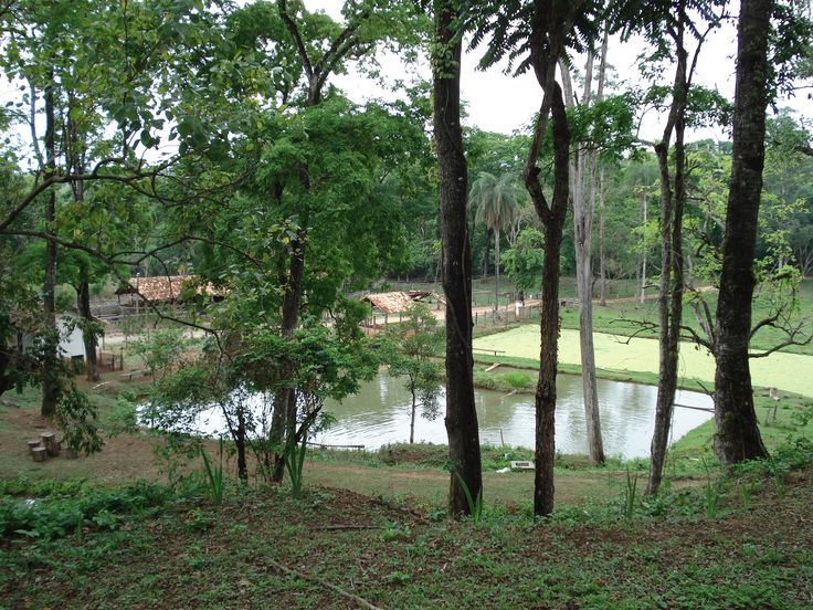 Jaguara Velha