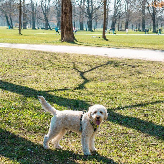 Die Ersten 5 Grundkommandos Fur Deinen Welpen Welpen Hunde Tiere