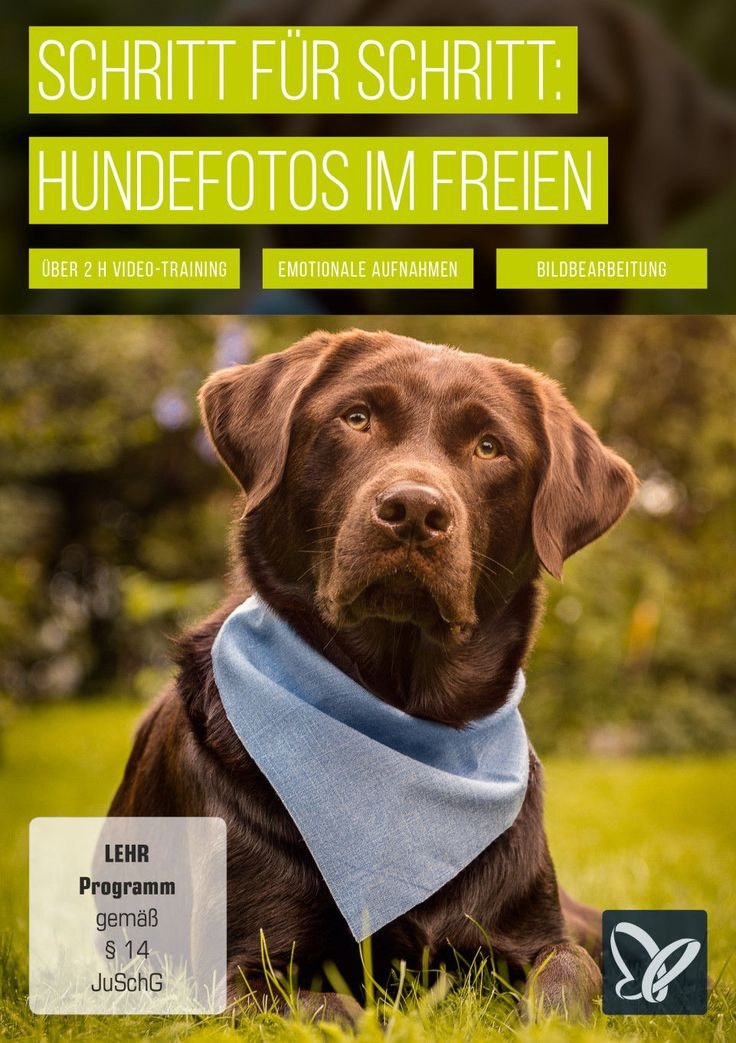 Hunde Outdoor