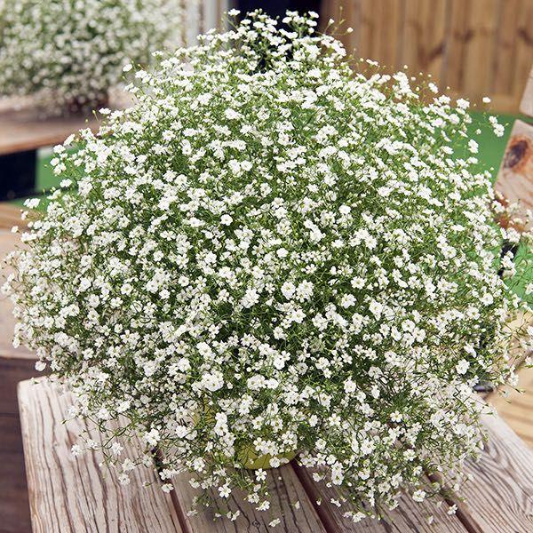 Pin On Flora