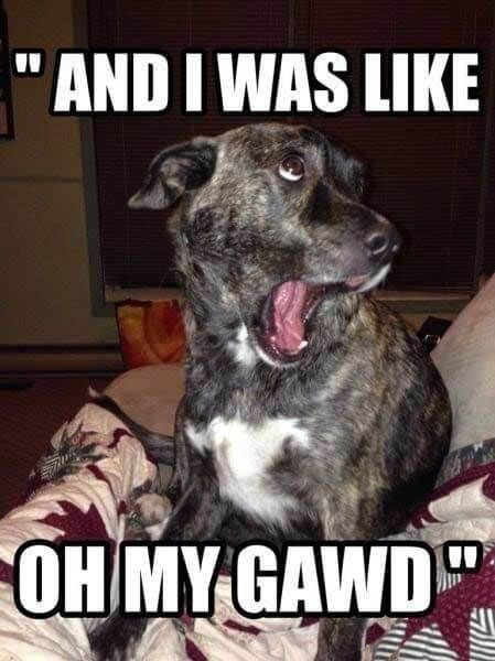 i was like oh my gawd funniest dog images