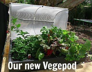 let the children play container ve able gardening with young children