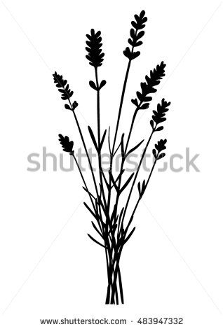 Bunch of lavender flowers - black silhouette - vector