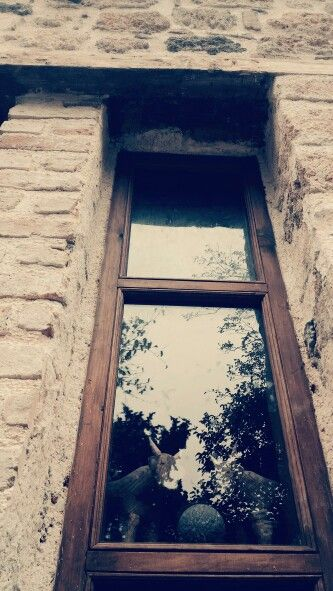 #window #bull #antalya #kaleici