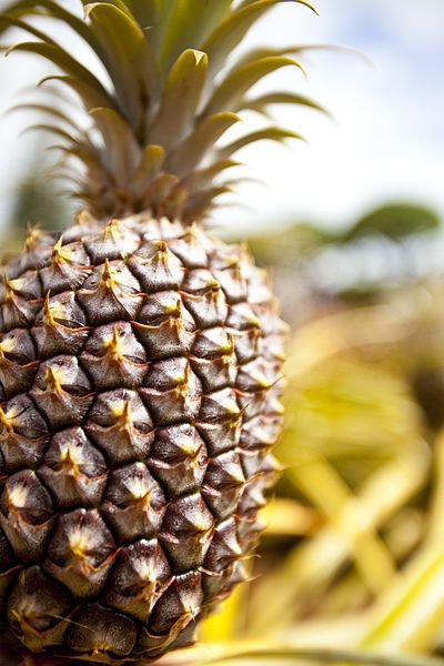 L'ananas, l'anti-cellulite