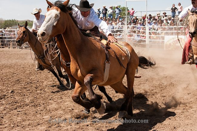 2012 Nfr Pick Up Men Miles City Bucking Horse Sale