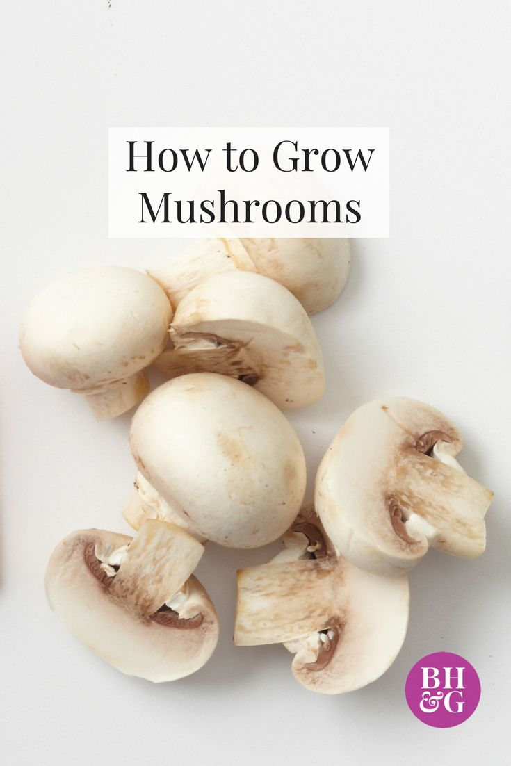 Grow #mushrooms year-round. These tasty chameleons of the food world are extremely healthy. Our helpful guide will tell you how and where to grow your mushrooms and the best types to grow at home. #mushrooms #growingmushrooms #gardeningtips #growyourownfood
