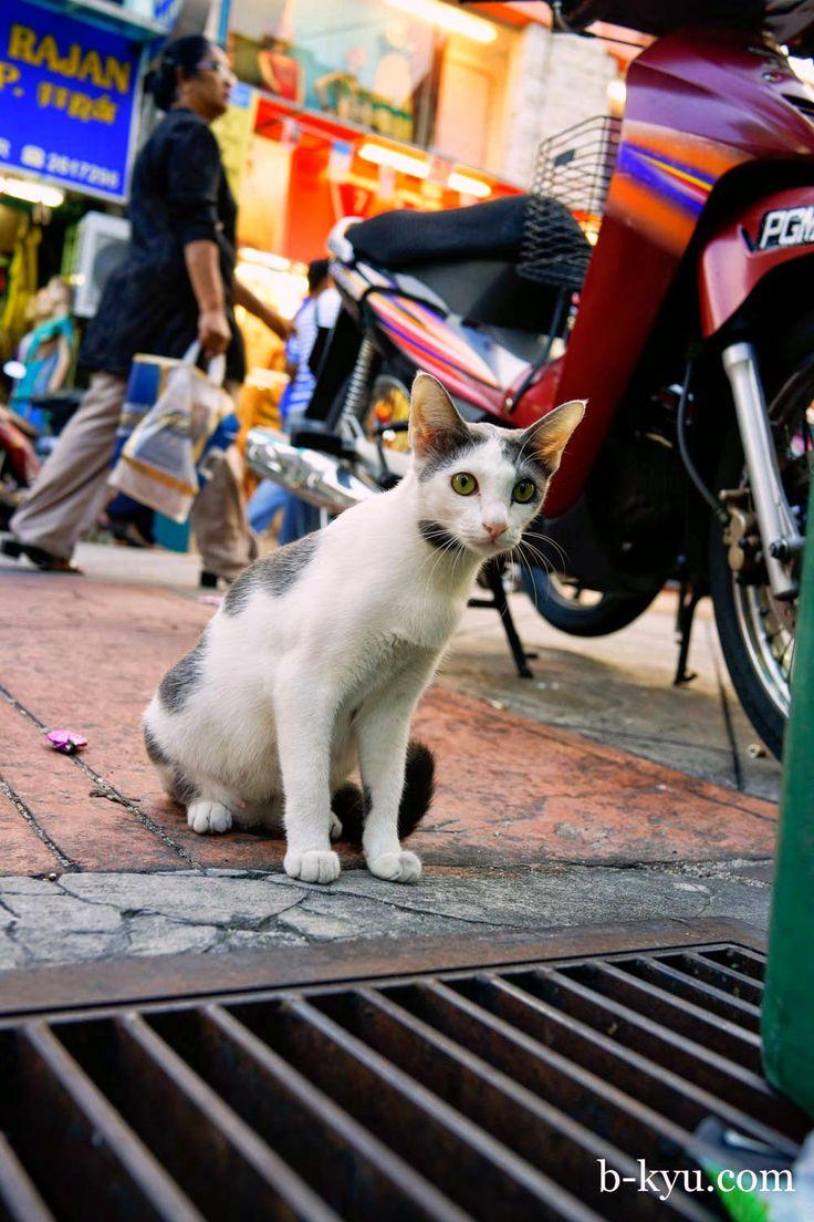 B-Kyu: B-Kyu Tour of Penang - Clan Jetties, Sri Weld Foodcourt, Sunset on the Esplanade and Ramly Burgers