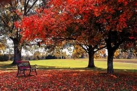 Red Tree Leaves: Autumn Photos, Fall Leaves, Favorite Places, Benches, Fall Colors, Desktop Backgrounds, Trees, Wedding Colors, Fall Weather