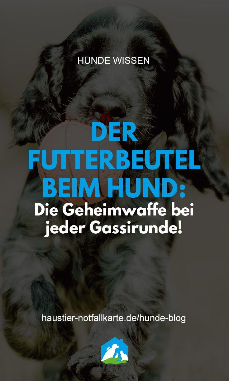 Der Futterbeutel Warum Er Das Gassi Gehen In Der Stadt So Aufwertet In 2020 Futterbeutel Hund Hunde Beutel