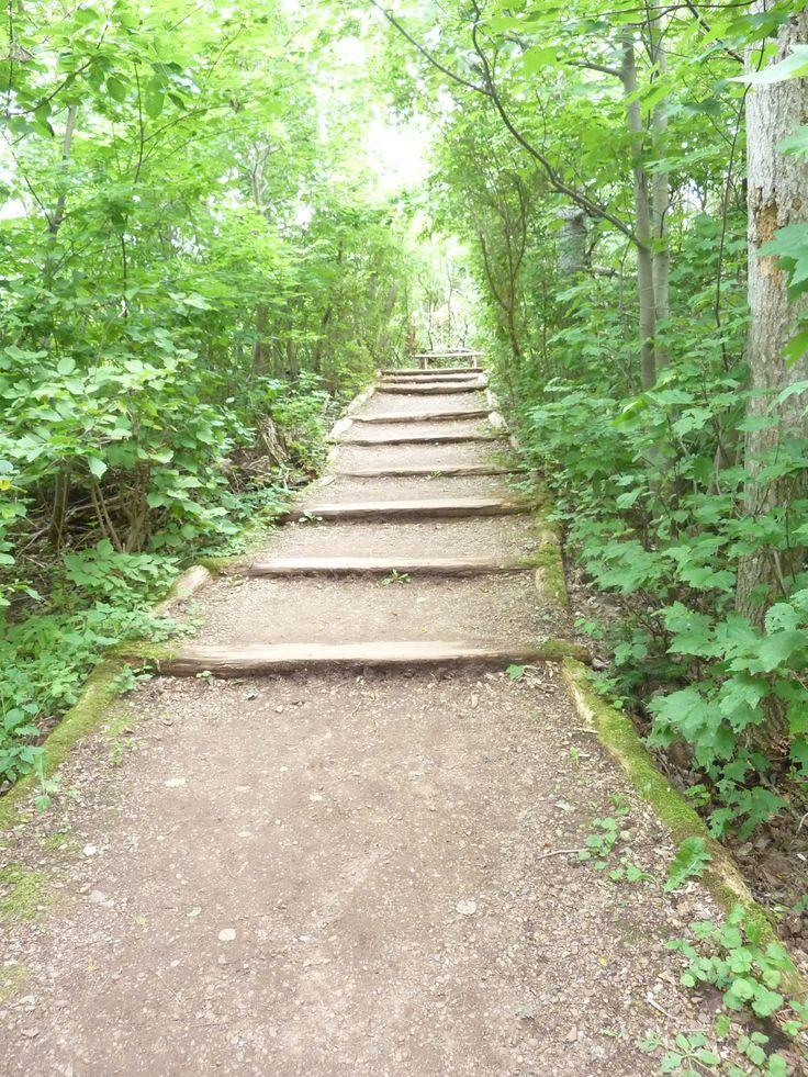 Escalier en tronc d 39 arbres vu sur le site anne et la for Anne et la maison aux pignons verts livre