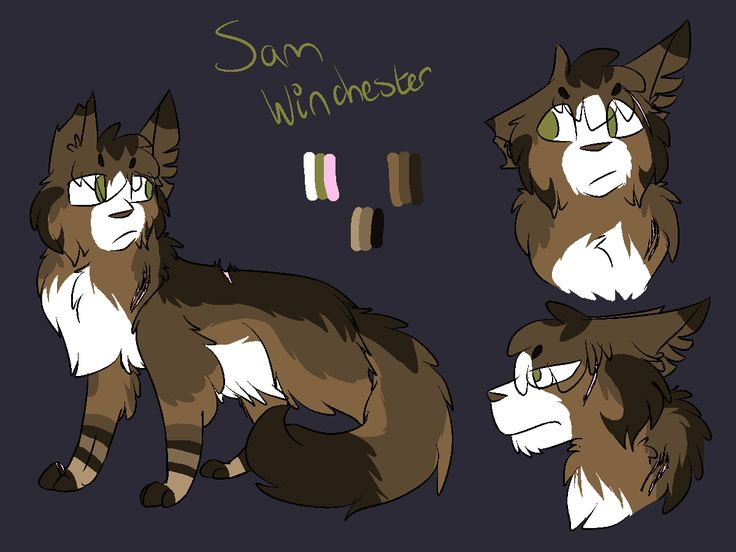 https://cat-character-designs.tumblr.com/post/159243861818/4-sam-winchester-long-furred-chocolate-ticked