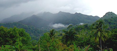 El Yunque Rain Forest. Puerto Rico. We hiked this rainforest several times while living on the island. SOOO peaceful!