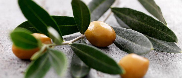 O poder do chá de folha de oliveira - Lucilia Diniz