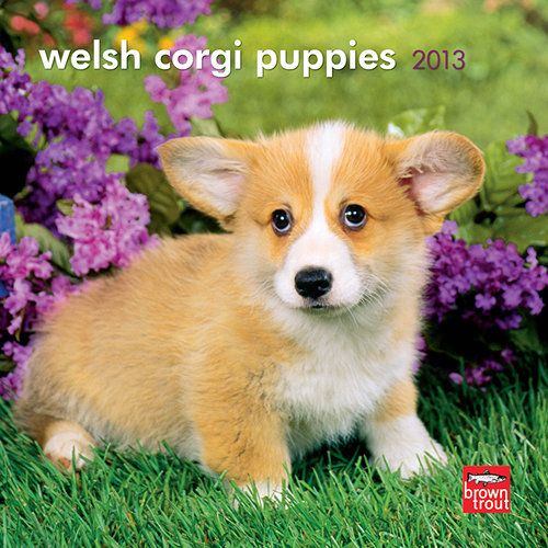 Welsh Corgi Puppies Mini Wall Calendar: Smart, sturdy, and even-tempered, Welsh Corgis are the smallest of the herding dogs. Though the origins of Pembroke and Cardigan Corgis may well differ, both make dependable and devoted companions.  http://www.calendars.com/Welsh-Corgis/Welsh-Corgi-Puppies-2013-Mini-Wall-Calendar/prod201300004631/?categoryId=cat10018=cat10018