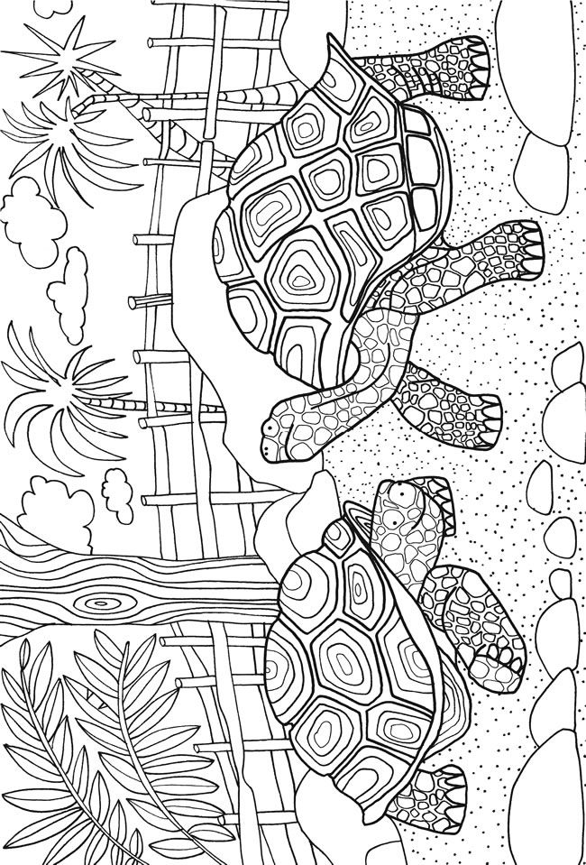 TURTLES: ZOO ANIMALS sample colouring pages @ Dover Publications