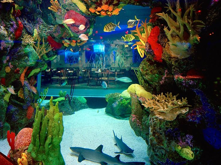 "This ""underwater dining adventure"" is right in the heart of Nashville. Located within the Opry Mills Mall, the Aquarium Restaurant offers expansive underwater views of its 200,000-gallon aquarium. The menu includes mahi mahi, shrimp, and macadamia–crusted tilapia, paired with views of an aquarium that houses more than 100 species of fish from around the world. The Aquarium has additional restaurant locations in Denver, Colorado and Houston and Kemah, Texas."