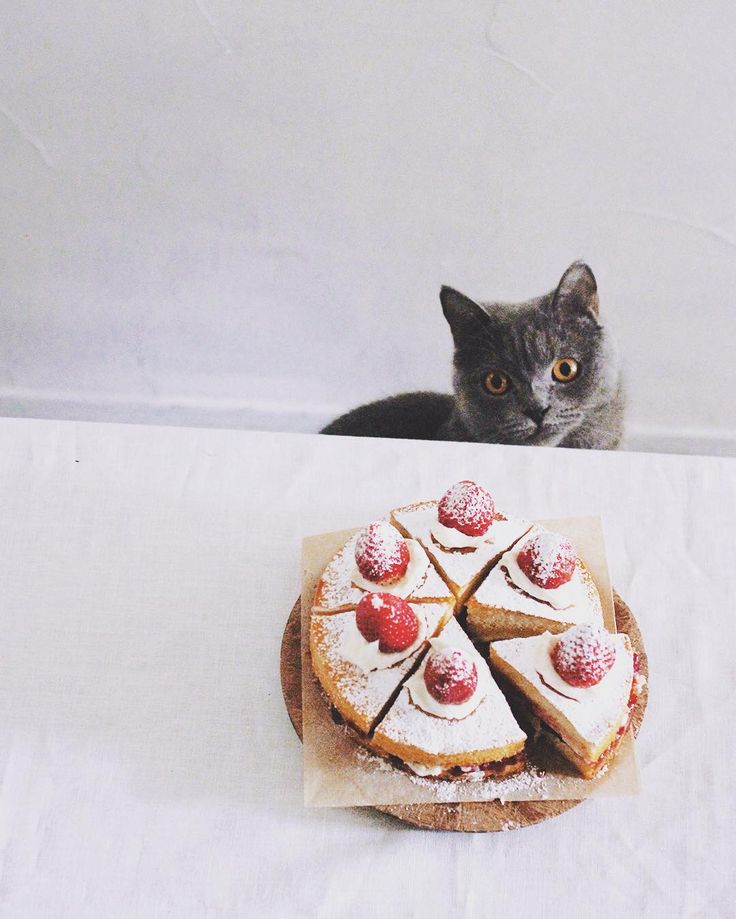 victoria sandwich cake🍰 . 今日3月13日はサンドイッチの日だって。おやつに素朴なビクトリアサンドイッチケーキ😋 もうケーキには無表情なボナ、ちょっと顔芸でも教えようかなー😁 . #ビクトリアサンドイッチケーキ #ヴィクトリアサンドイッチケーキ #おやつ #スイーツ #サンドイッチの日 #樋口ボナ #bonahiguchi #victoriasandwichcake