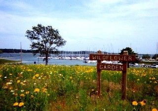 Cedar Mills Marina and Resort on Lake Texoma Lakeshore