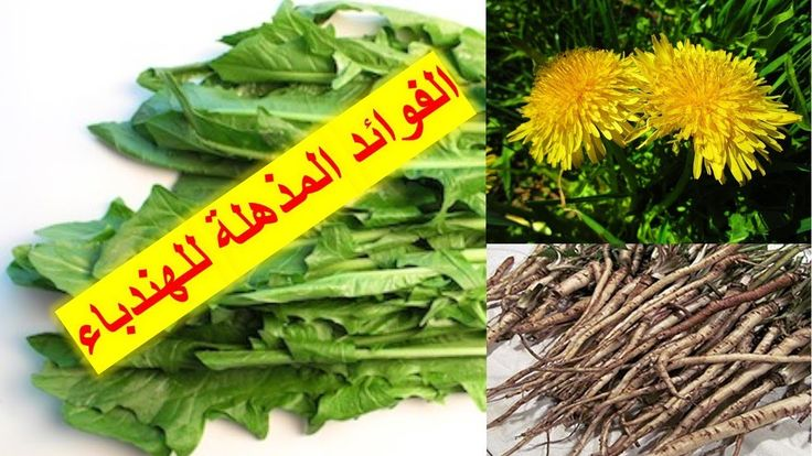 فوائد الهندباء أو العلت المدهشة القسم الاول The Amazing Health Benefi Herbs Remedies Fruit