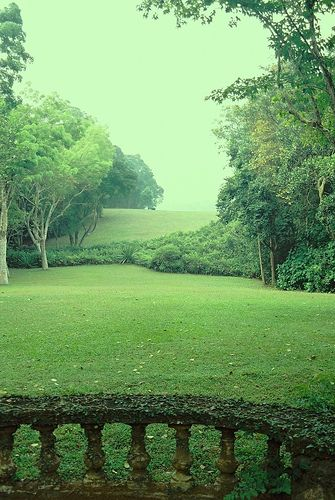 A lush green view