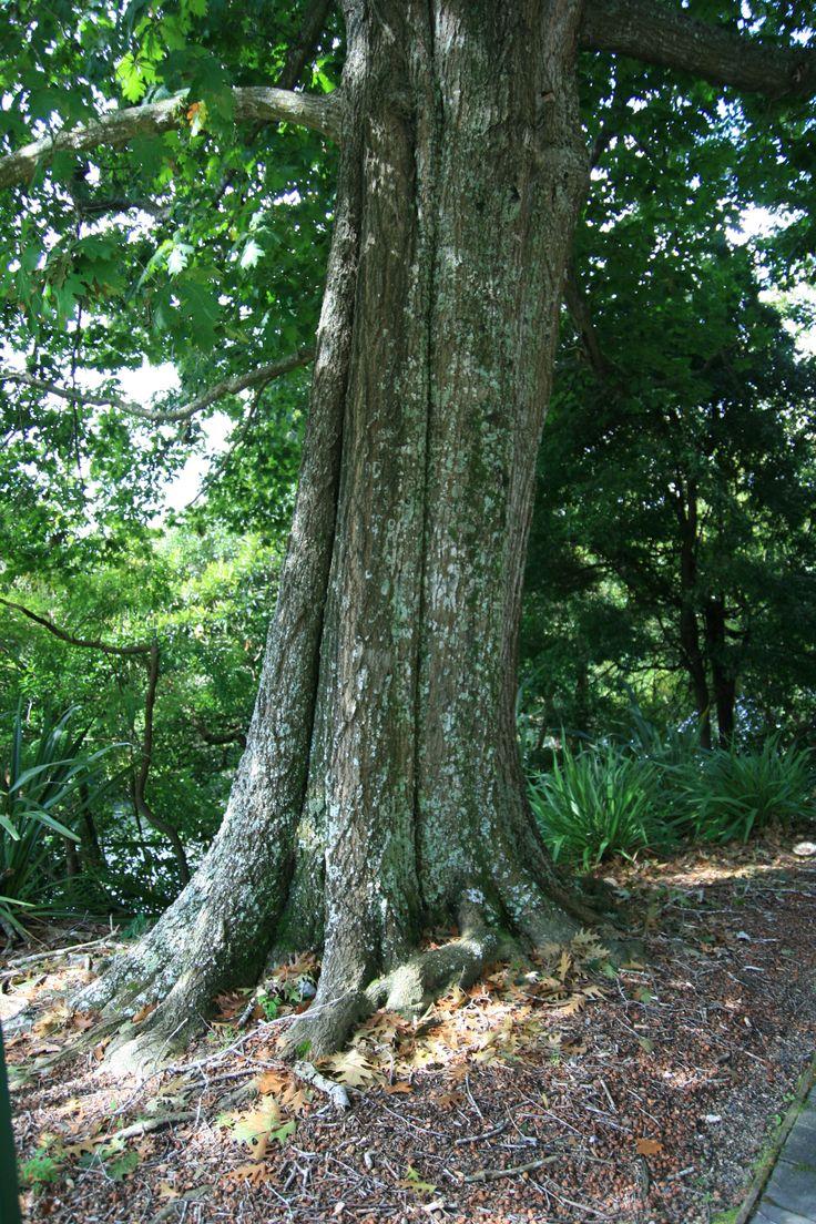 Tree trunk display