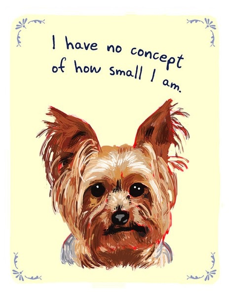 : Yorkie, Small Dogs, Pet, So True, Tiny Confessions, Things, Yorkshire Terriers, Big Dogs, Animal