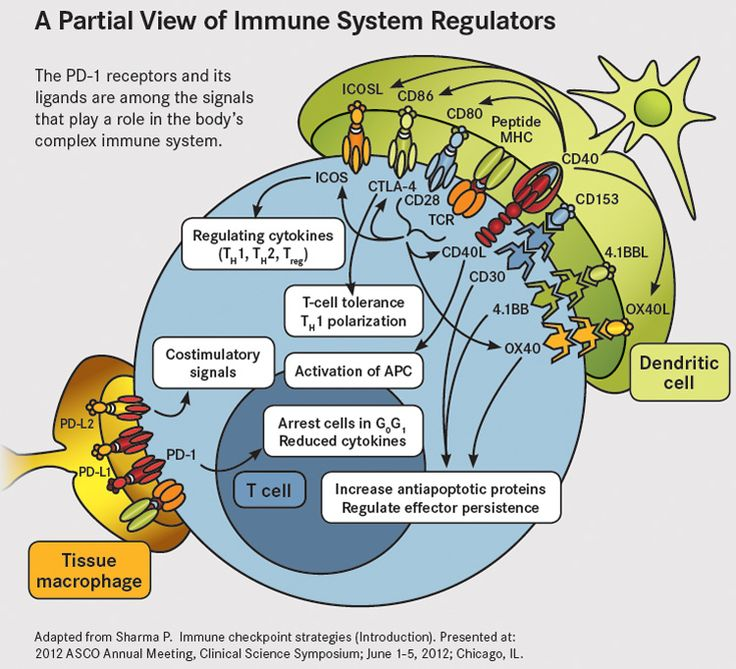Immune System Regulators
