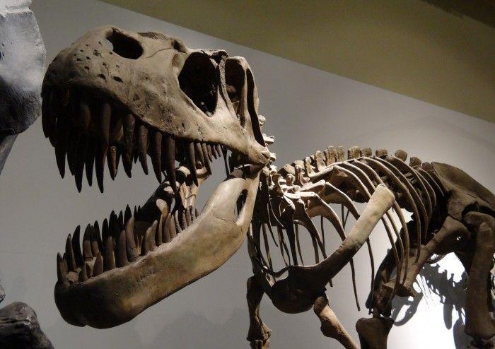 Dinosaurios Museo de Ciencias Naturales de Madrid
