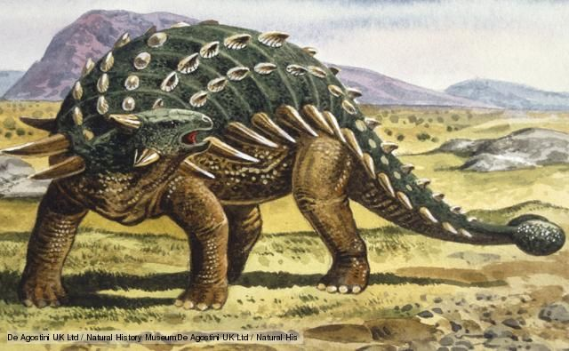 Ankylosaurus - Looking like reptilian armadillos, or prehistoric tanks, Ankylosaurs were heavily armored dinosaurs with protective plates over their head and shoulders. Some species took their protection to extremes and even had armoured eyelids. Spikes and protrusions were common in a bid to deter predators from taking a bite. Some Ankylosaurs had a large, heavy club at the end of the tail for wielding as a weapon (BBC 2013)