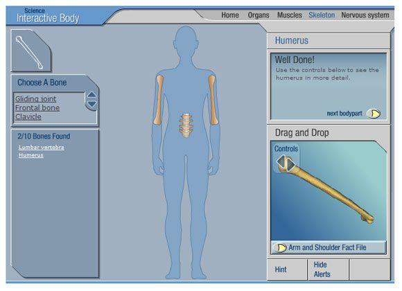 free interactive anatomy