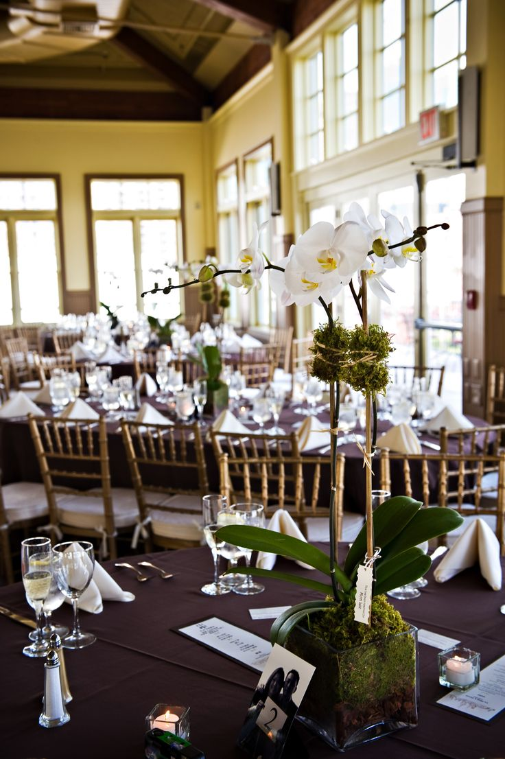 Double wedding soundtrack - Living Orchid Plant Centerpiece Could Also Double As A Wedding Favor