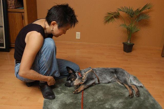 How Can You Teach A Dog New Tricks Dog Hacks Dog List Dogs