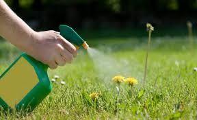 Weed spray Weed be Gone: 1 gallon Vinegar 2 cups epsom salt 1/4 cup Dawn Dish
