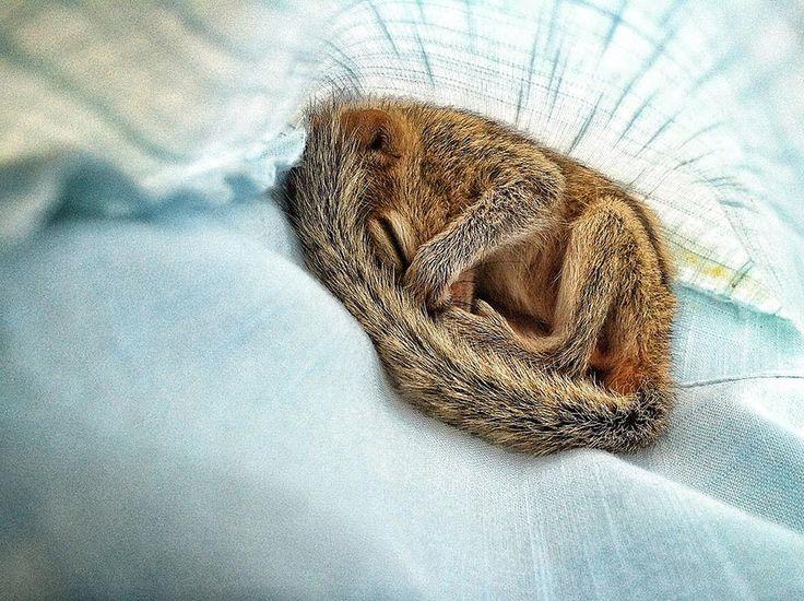 Filmár z BBC Wildlife našiel v lese opustené mláďa veveričky.