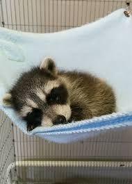 Resultado de imagen para animales bebes hermosos