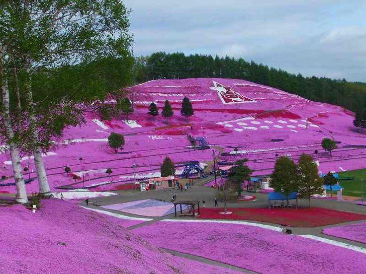 Higashimokoto Flower Park - The Flower Hill of Hokkaido   Oddity ...