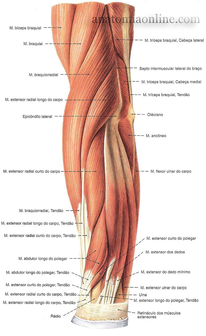 7 best musculos images on Pinterest | Summary, Medicine and School