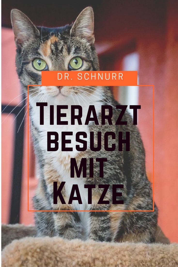 Katze beim Tierarzt: Tipps für einen entspannten ersten Besuch. http://drschnurr.de/katze-beim-tierarzt