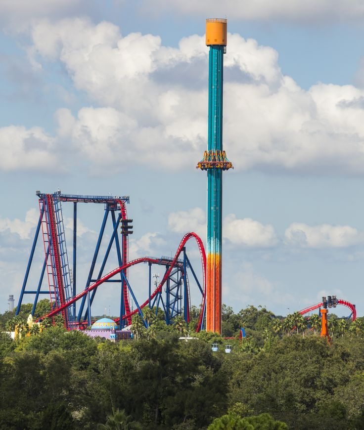 Falcon's Fury and Sheikra at Busch Gardens