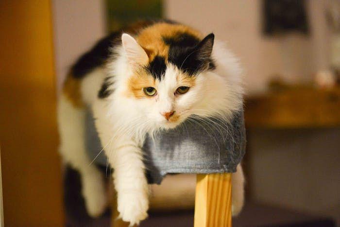 1001 Lustige Katzenbilder Und Katzenspruche Katzen Verhalten Katzchen Pflege Katzen Bilder