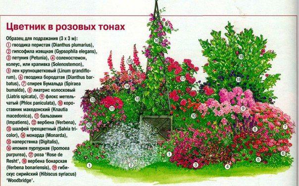 СХЕМЫ ЦВЕТНИКОВ, КЛУМБ И МИКСБОРДЕРОВ.   159 фотографий